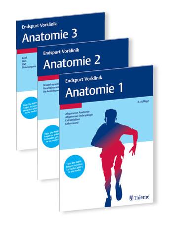 Endspurt Vorklinik: Anatomie