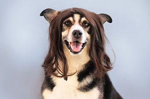 Manche Patienten setzen schon vor dem eigentlichen Haarausfall auf eine Perücke.