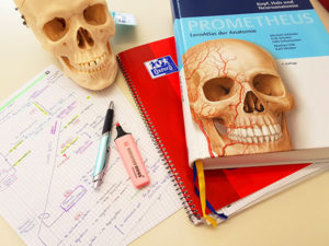Anschauungsunterricht gibts im Präpkurs, die Theorie muss man fleißig aus dem Anatomieatlas lernen.