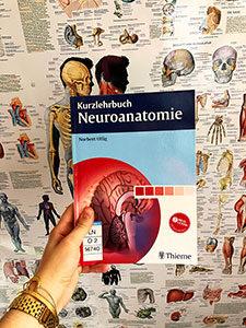 Neuroanatomie gehört in Heidelberg zum 4. Semester des Zahnmedizinstudiums.