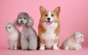 CDB-Produkte gibt es für viele verschiedene Haustiere.